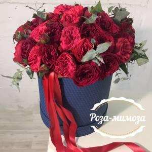 51 красная пионовидная роза в коробке с лентами R001