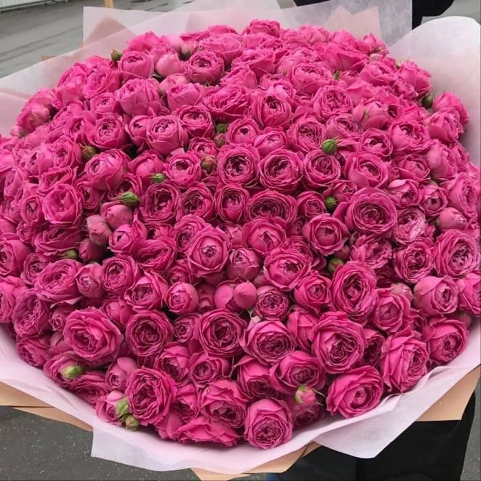 Большой букет пионовидных роз R891