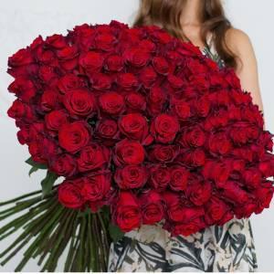 Большой букет 101 красная высокая роза R373